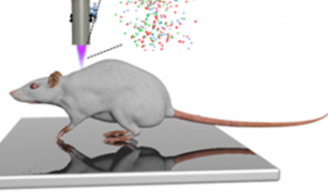 Non-thermal air plasma promotes the healing of acute skin wounds in rats