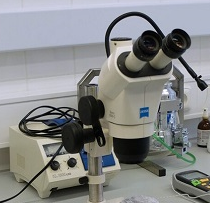 Technician of microscopy